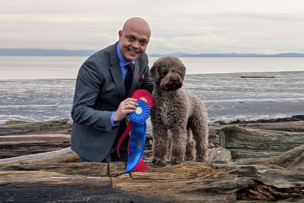 Lagotto Dog on beach with show awards and handler