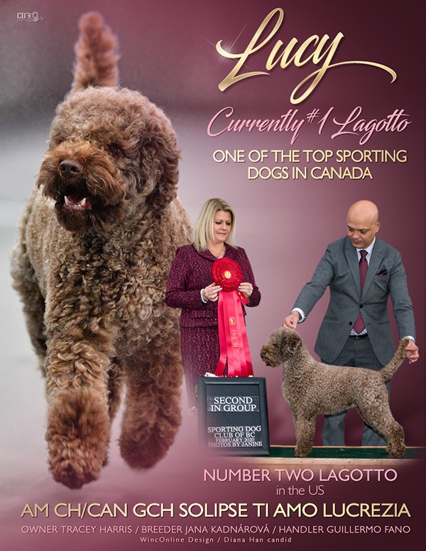 Dog show advert Lucy Lagotto