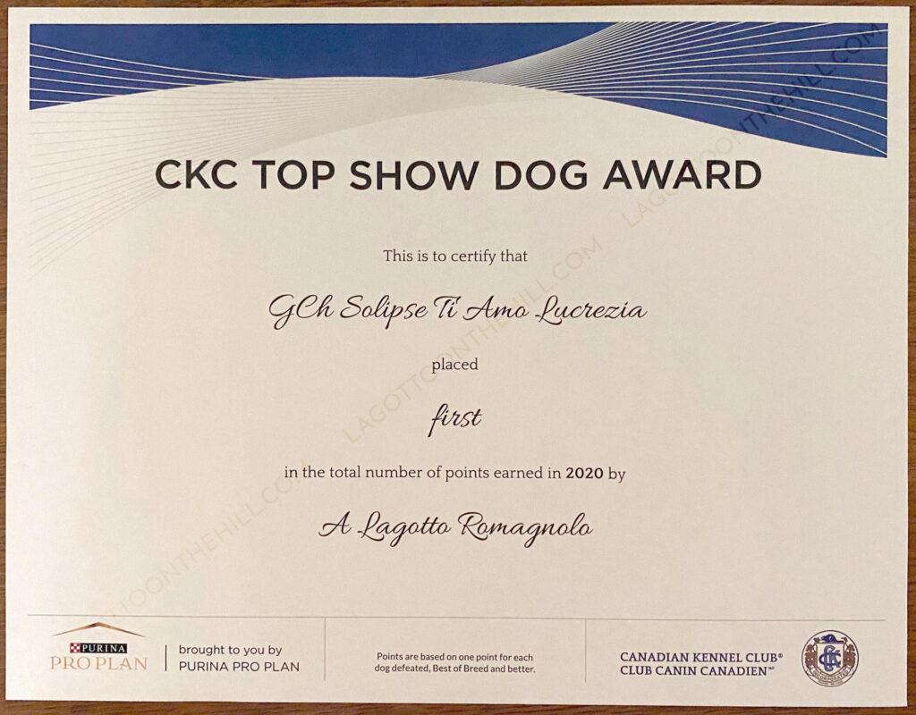 CKC Lagotto top show dog award